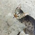 Tural Hüseynzadə Profile Picture
